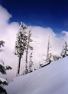 Snow coated trees along the ridge
