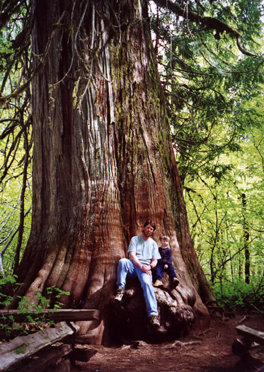 Bryden and Matt sitting on the trunk of an ancient and huge cedar tree